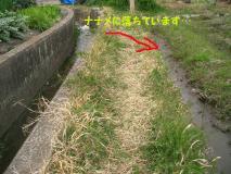 この畦をとおるためには…