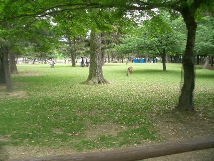 奈良公園の一部