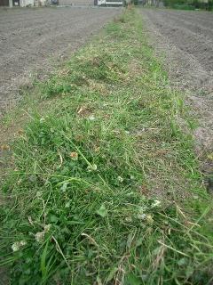 刈られた畦草