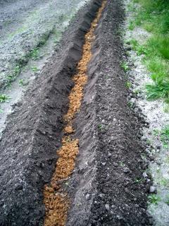 米ぬか堆肥を入れてみた