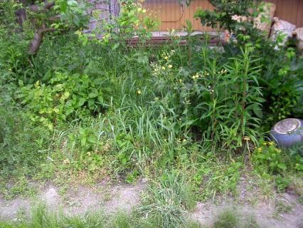 打ち捨てられた裏庭