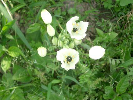 雑草の中にきれいな花が!