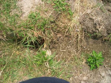 埋もれている水口