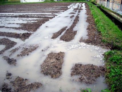 昨夜の大雨でまるで入れたかのように溜まっている水