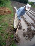 畦のふちを鍬で耕して…