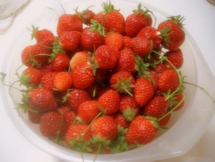 苺がいっぱい♪