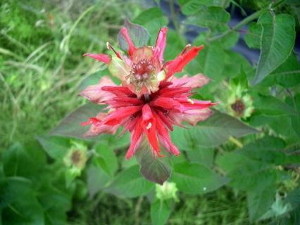 不思議なカタチの花です