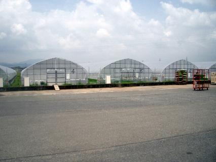経済センターの育苗施設