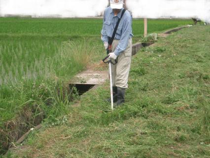 草刈り機で畦草刈り