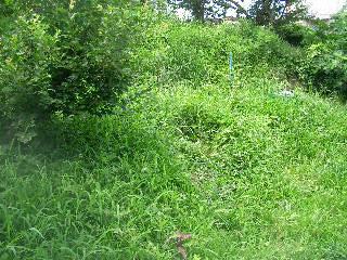 こちらもジャングルだ#12316;(^^;)2