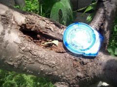 アリの巣撲滅作戦