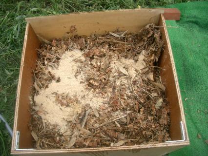 落ち葉で堆肥を作ろう