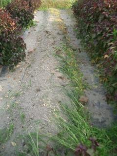 キュウリとインゲンの跡地を耕す