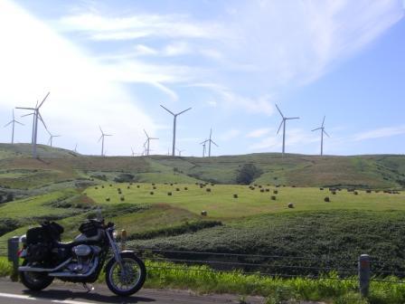 カイワレ風車