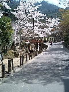 数々の桜ソング合唱