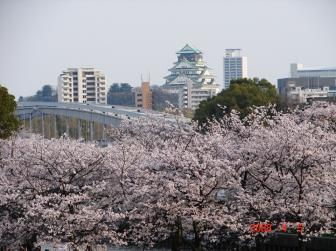 大川の桜3