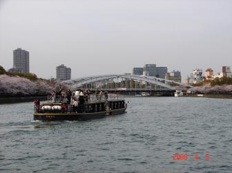 大川の桜4