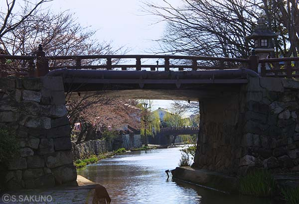 近江八幡02024W4239