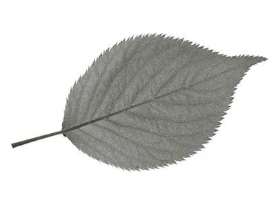 葉っぱ素材