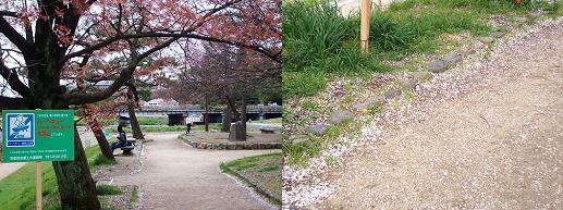 散り行く桜の花びら