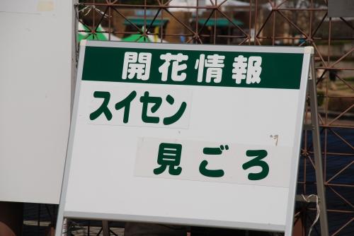 2008_04110002.jpg