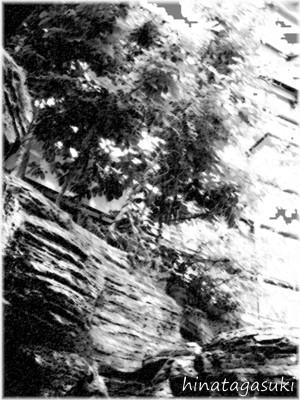 d01-06.jpg