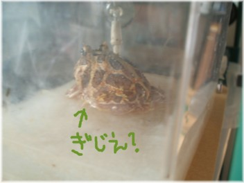 f-060918a.jpg
