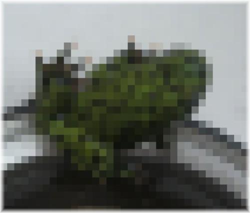su-070714.jpg