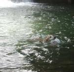 泳ぐエルちゃん