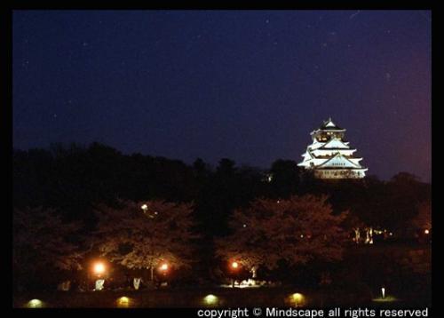 大阪城とサクラ1