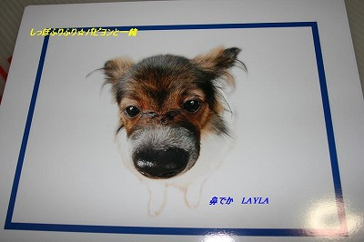 LAYLA2