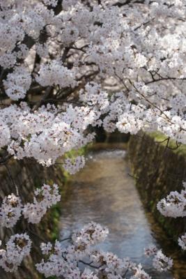 花の京都は素敵でした