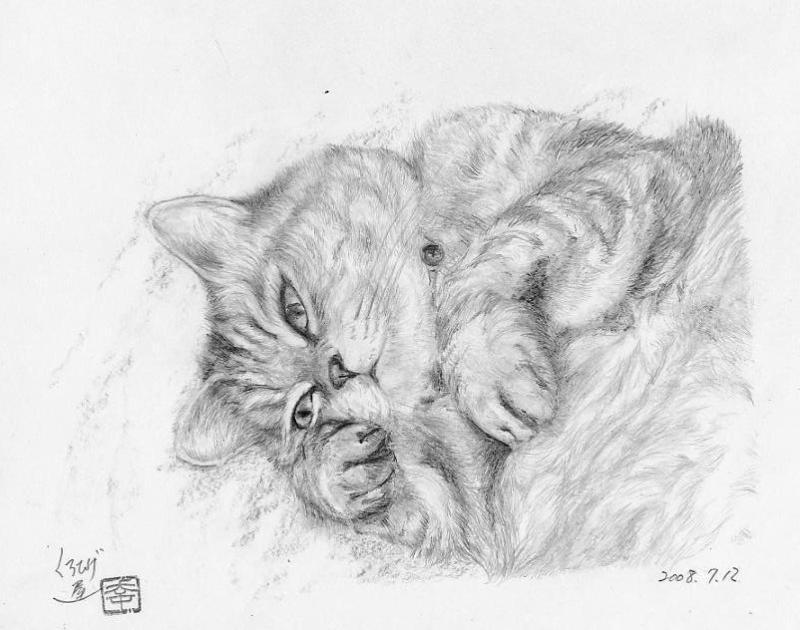 ミーコ、鉛筆画