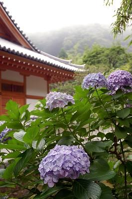 DSC_1779鎌倉