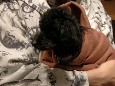 毛布でグルグル