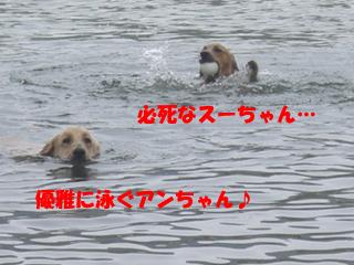 CIMG6896.jpg