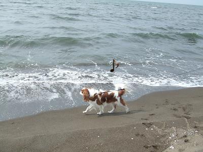 海の散歩♪1