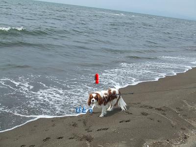海の散歩2