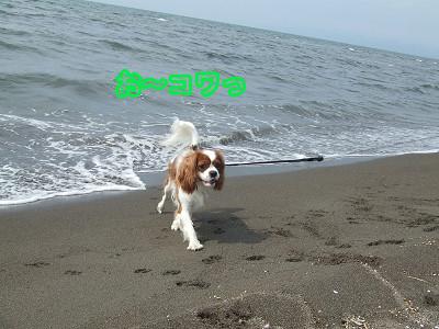 海の散歩3