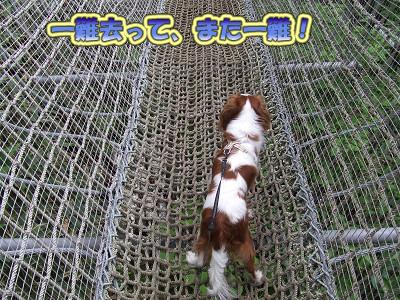 マグマのクレパスに架かる吊橋