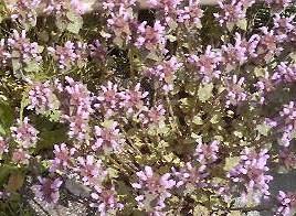 庭の花07
