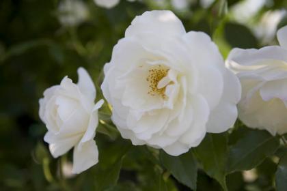 ホワイト-1