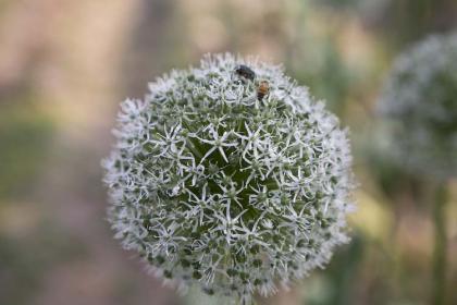 ミツバチ-1