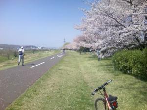 桜の多摩川CR