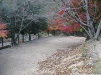 柏原渓谷キャンプ村-7