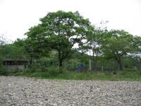 天満宮前キャンプ場-17