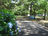 糸根地区公園-11