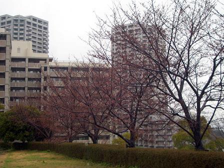 広域公園の桜並木