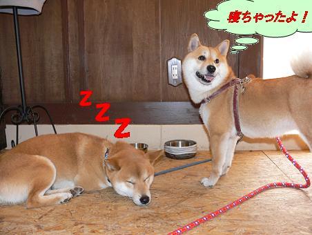 寝ちゃったよ!