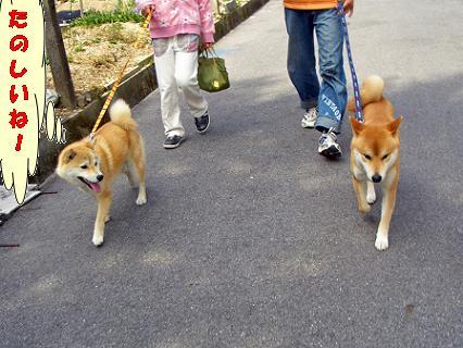 今日は一緒に歩こう!